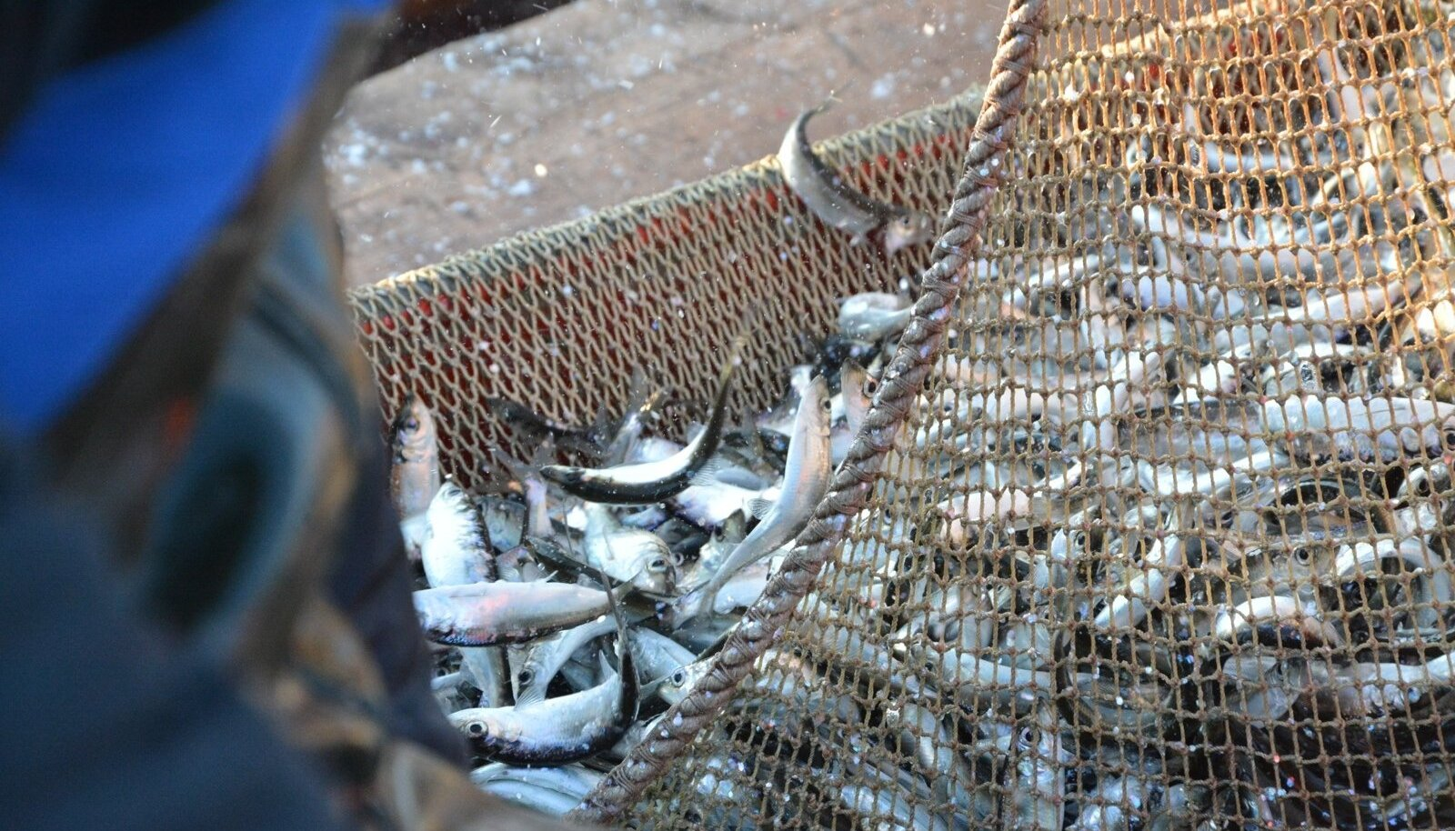 Kalapüük. Foto on illustratiivne.