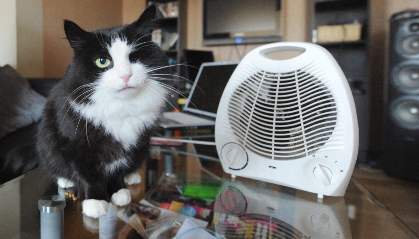 Kui tuba on külm, ei karda isegi kõige kartlikum kass puhuri tuult ega häält.