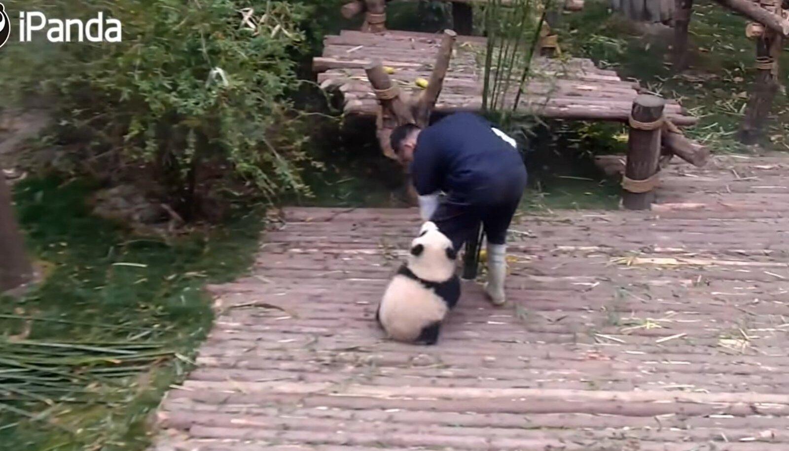 Panda ei jäta jonni