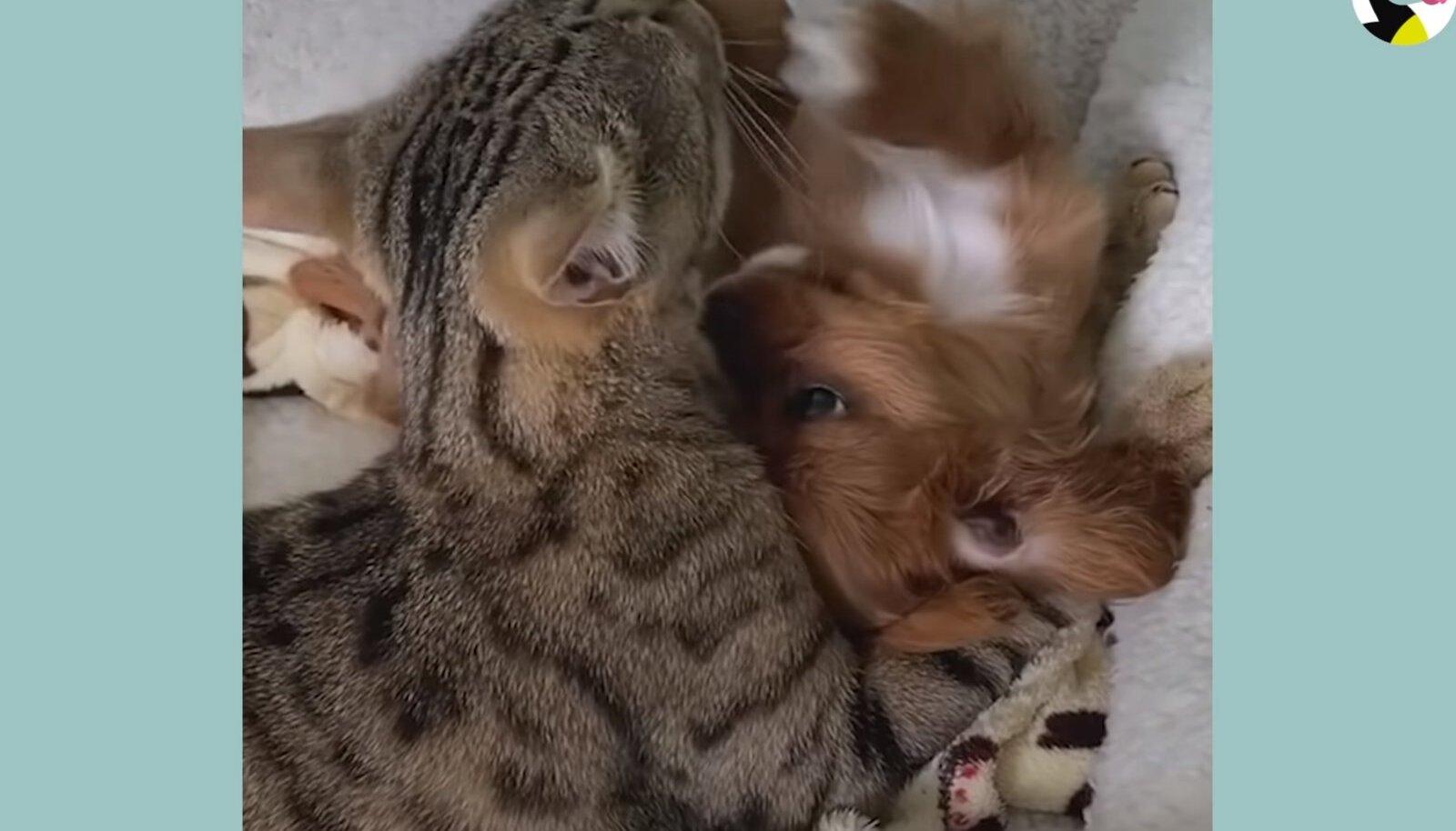 Teddy ja Albi