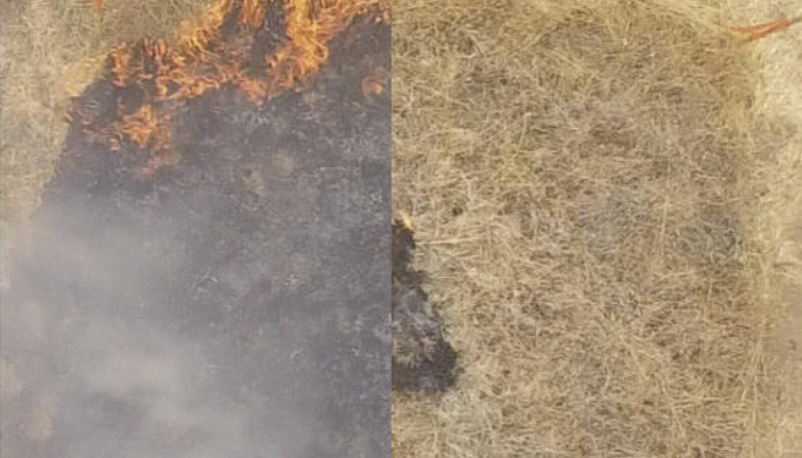 Californias läbi viidud testid näitasid, et geel pärsib tule levikut olulisel määral. Paremal geeliga töödeldud rohi, vasakul töötlemata ala pärast sama ajaperioodi.