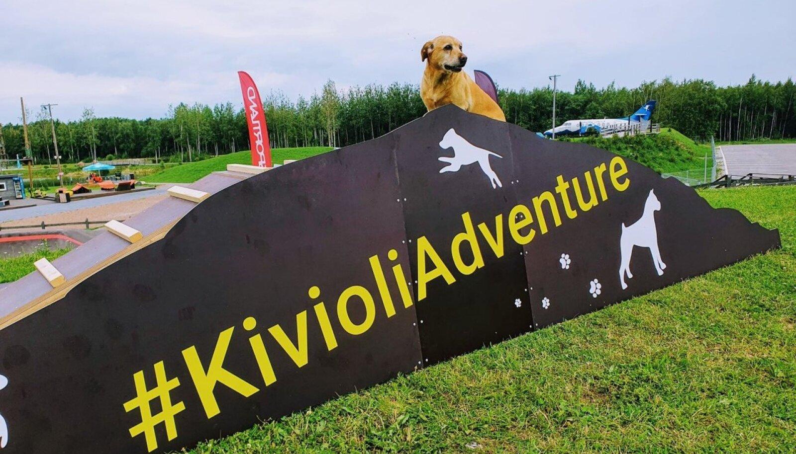 Kiviõli seiklusparki on oodatud ka koerad