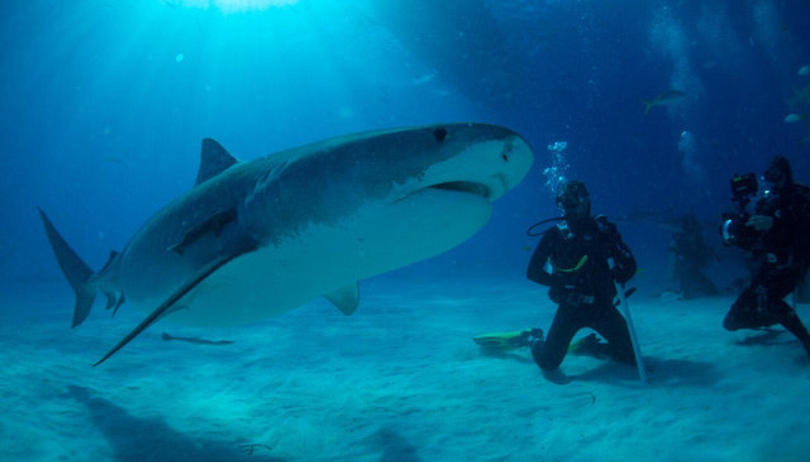 """""""Päästke see hai!"""
