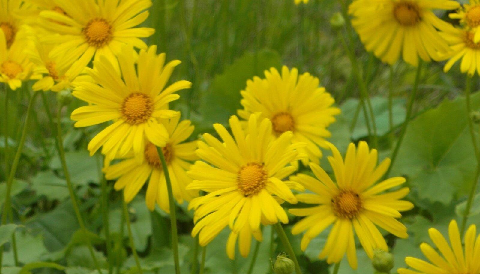 Lilled maikuu teisel poolel