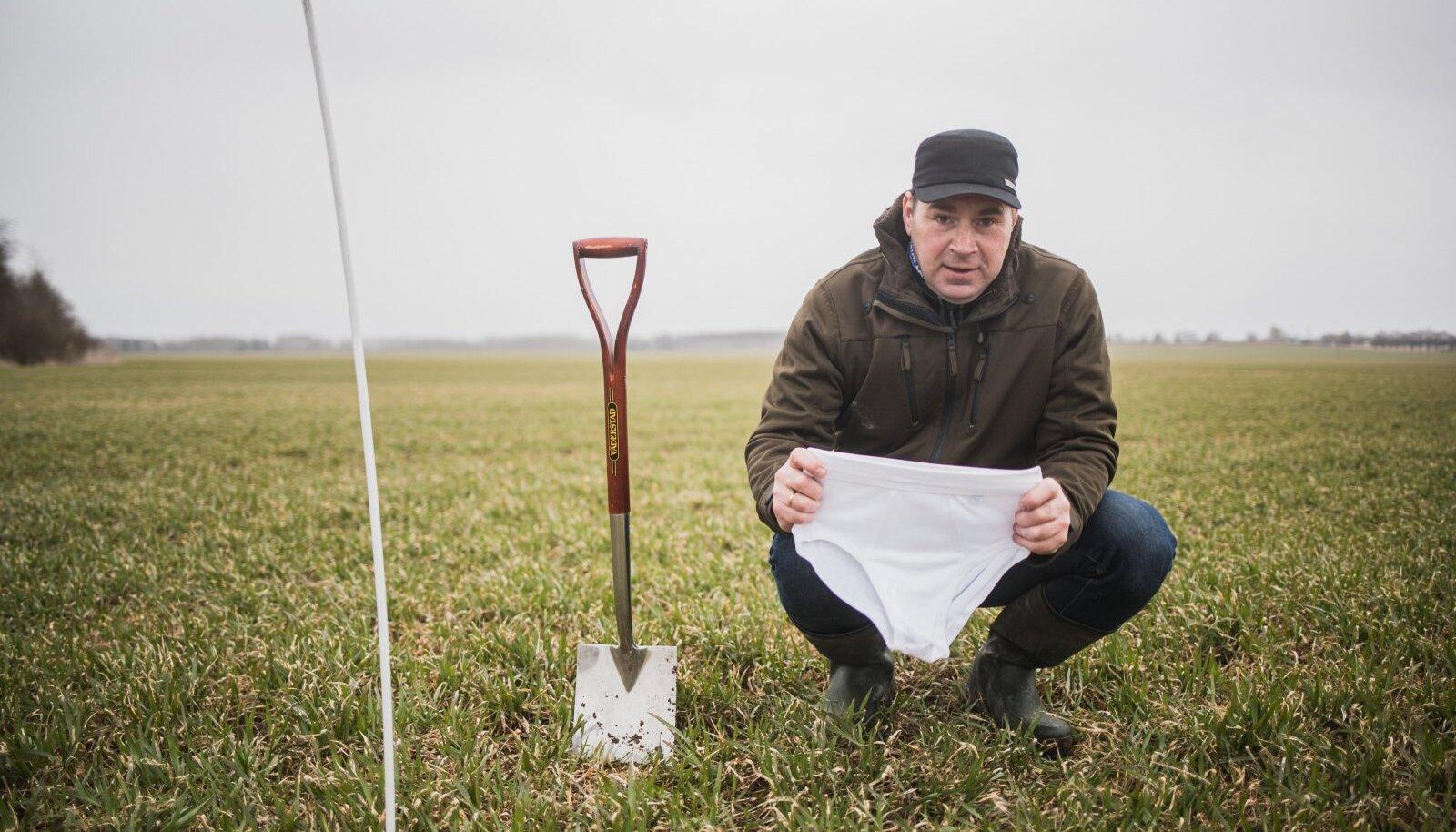 Taimekasvataja Madis Ajaots loodab, et aluspükstest jääb juuni lõpuks alles ainult kummiäär.