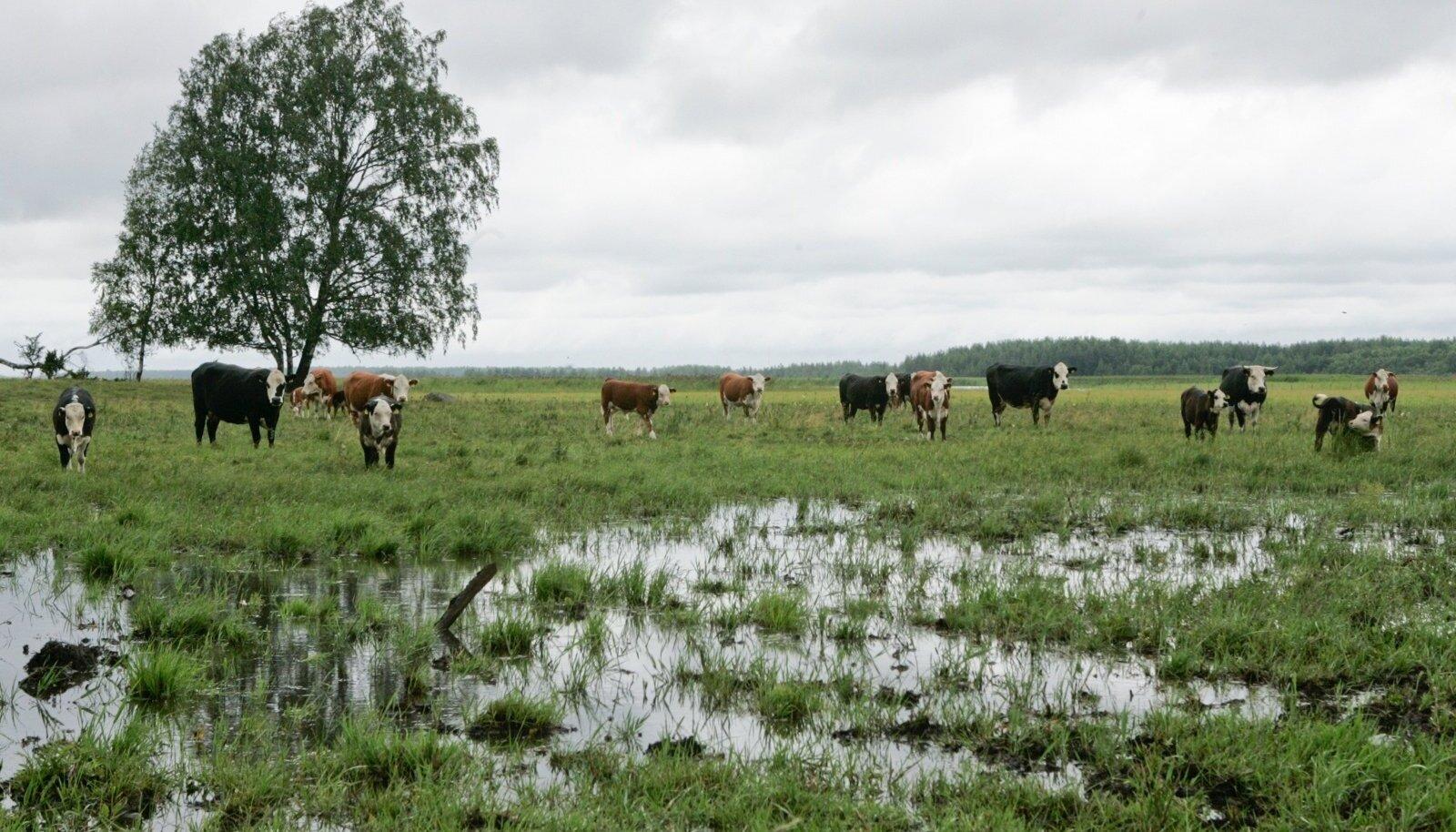 Uue ÜPP eelarve plaanides on loodusväärtuslike põllumaade toetamist ette nähtud veelgi vähem kui praegu.