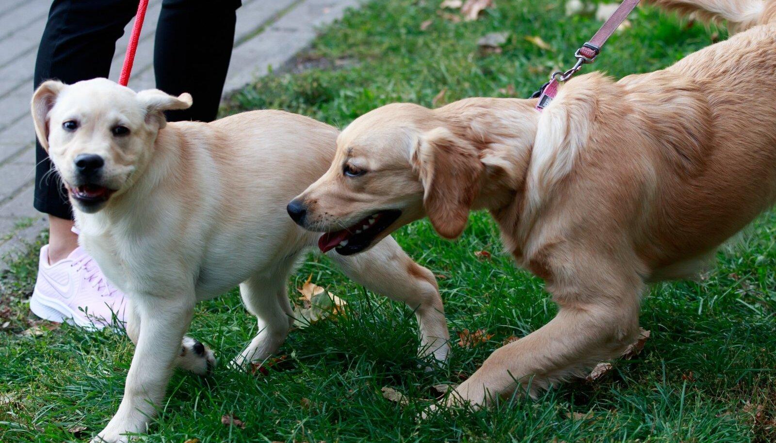Jalutuskäigud ja mängud hoiavad koera heas vormis