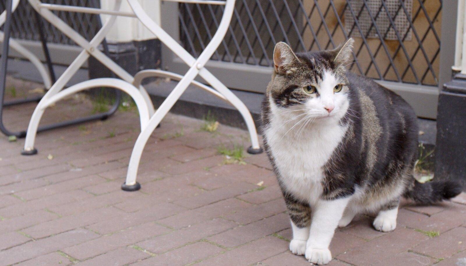 """Kass Abatutu filmis """"Kass Amsterdamis"""" muudab linnalooduses toimuva naljakaks ning kaasahaaravaks elamuseks kogu perele."""