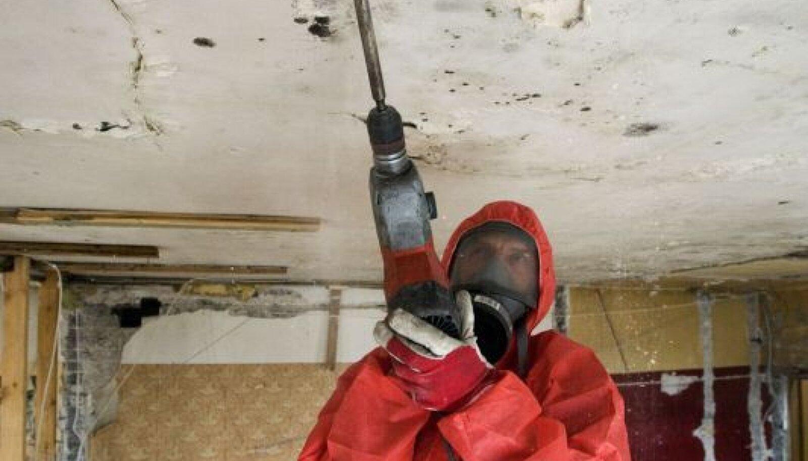 TÕRJE: Asbeko töötajad eemaldavad müügijuhi sõnul hallitust samu ohutusmeetoteid kasutades, mis muidu leiavad rakendamist asbestitöödel.