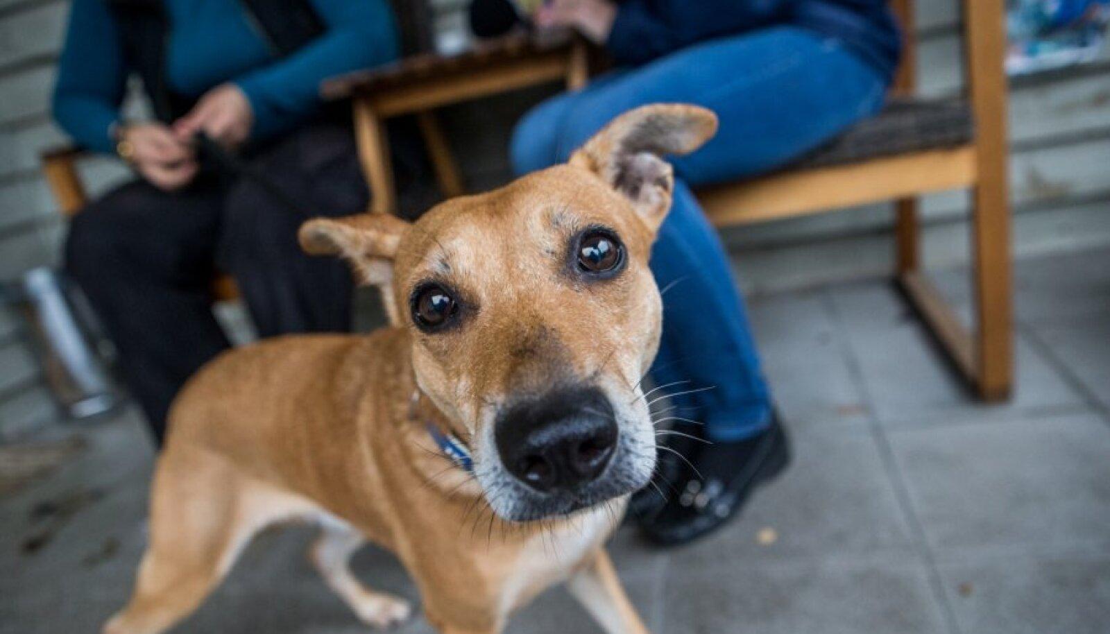 päästetud koer hoiupaigas