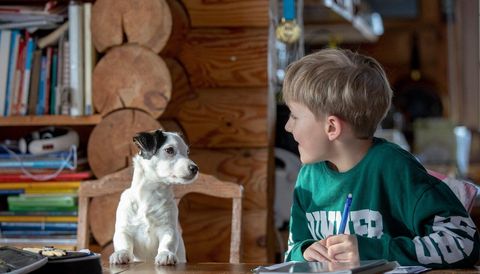 Niipalju, nagu on erinevaid koolilapsi, on ka erinevaid suhtumisi distantsõppesse, fakt igatahes, et koolis koos koeraga õppida ei saa... Isegi Toots mitte!