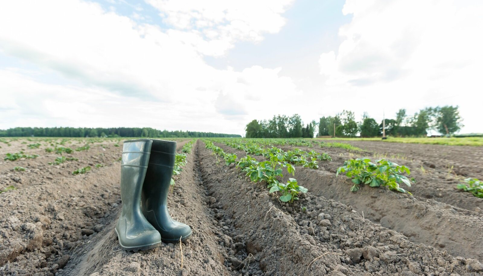 Põllumeeste arvates on Eesti põllumajandus muu maailmaga võrreldes keskkonnahoidlik. Keskkonnakaitsjad ütlevad, et kordame teiste riikide vigu.