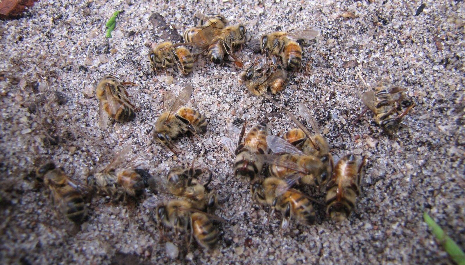 Väino Eskla mesilas hukkunud mürgistusnähtudega mesilinnud.