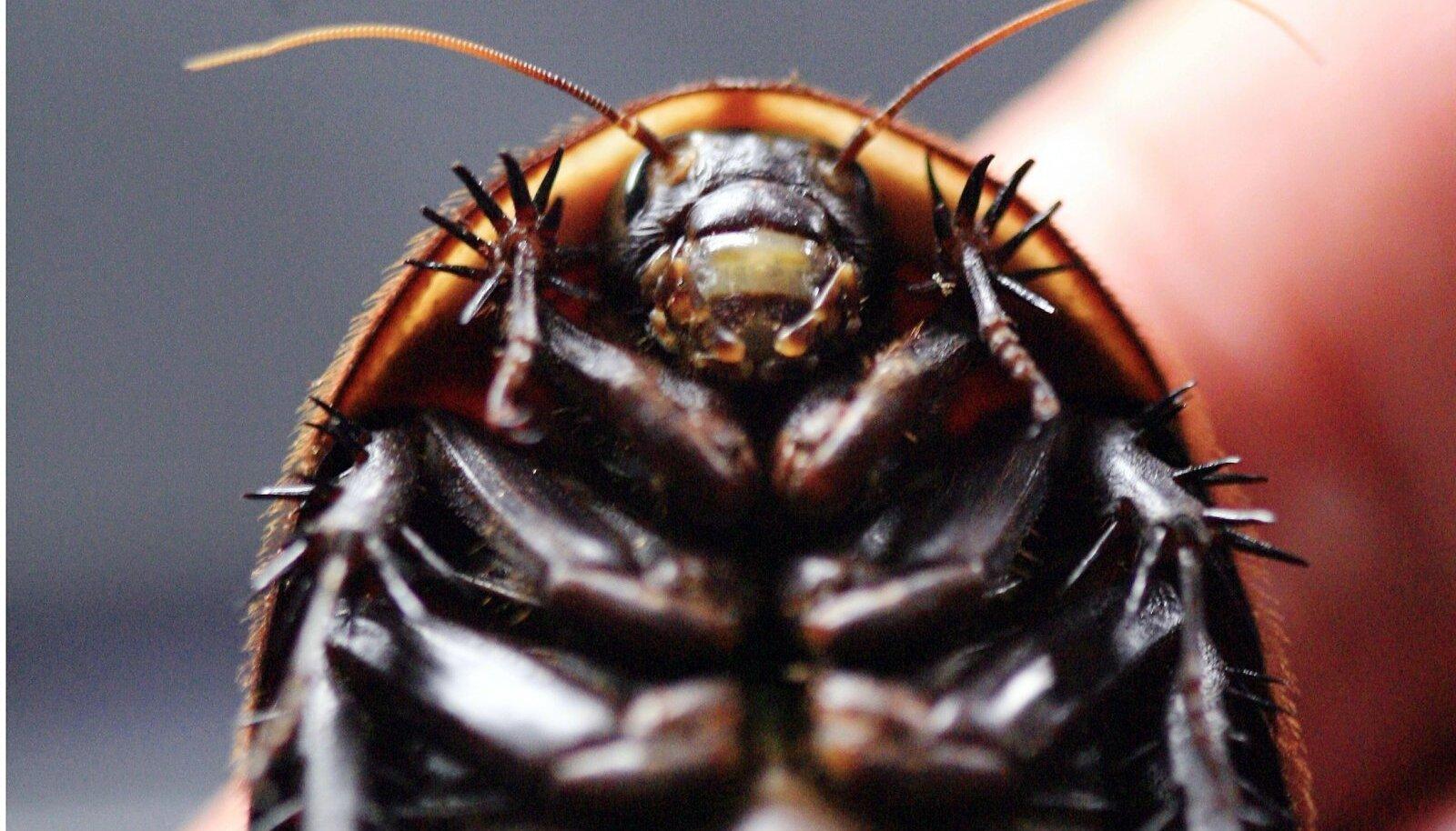 Paavlipäeval pole ilus putukaid hävitada.