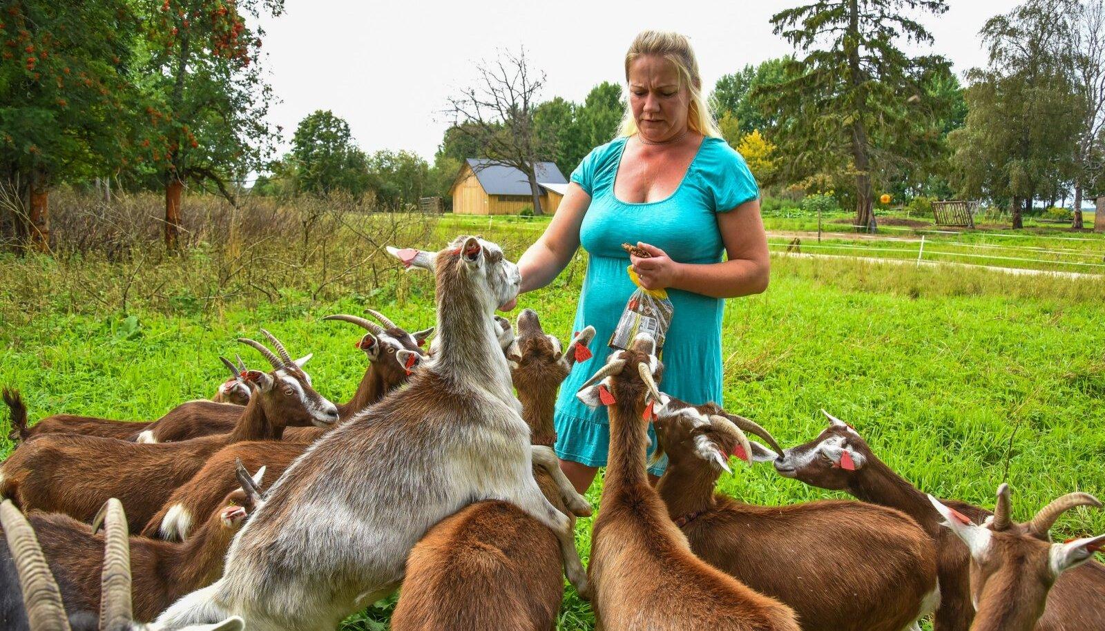 Üks uusi tulijaid on Järva- ja Viljandimaa piiril asuv OÜ Seitse Kitsetalle. Perenaine Anne-Mai Sutt lubab, et saab tutvuda talu loomade ja lindudega, võtta einet kodukohvikus ning osta kaasa talutoodangut.