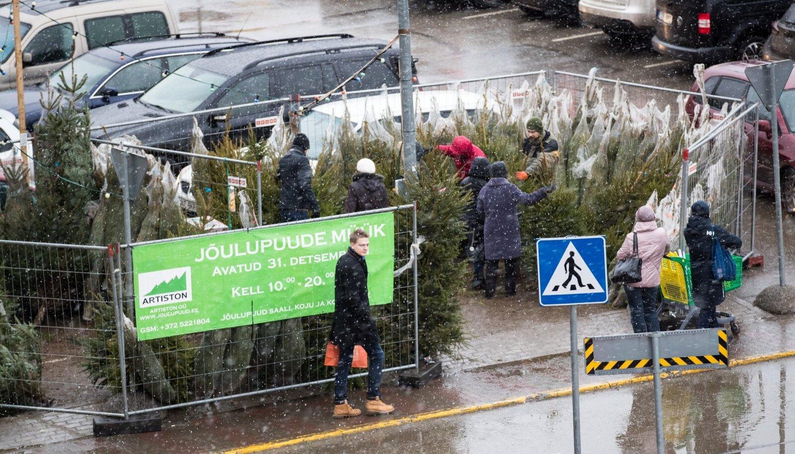 Uuri, kus on kõige odavam jõulupuu jooksva meetri hind!