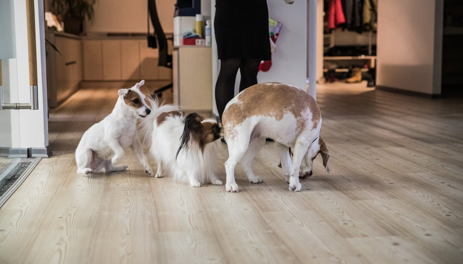 Sageli ronivad koerad üksteisele selga just tutvudes