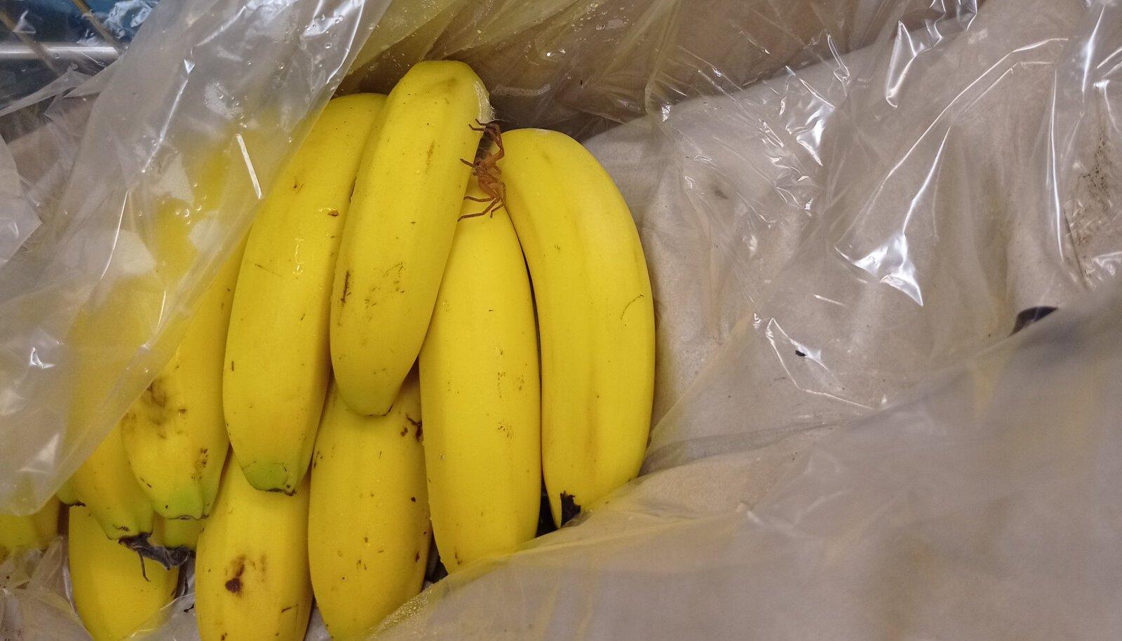 Ämblik banaanikastis