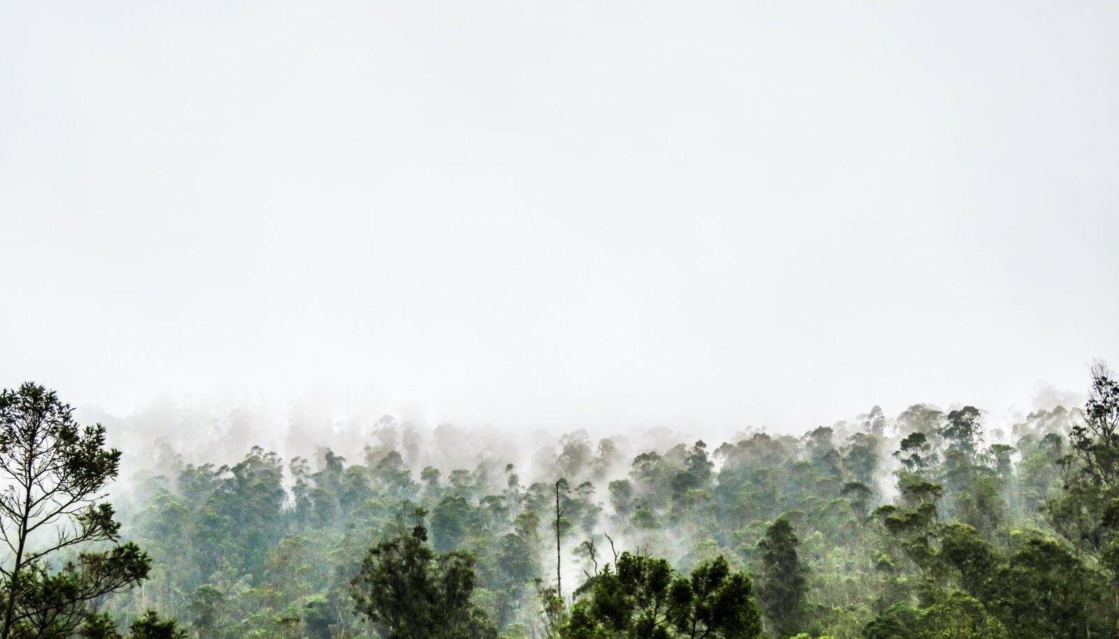 Troopilised metsad vallandavad süsinikku. Ja see on halb!