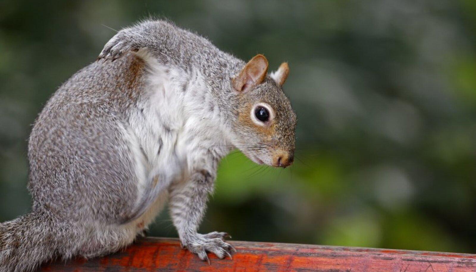Ka orav tunneb vajadust kratsida.