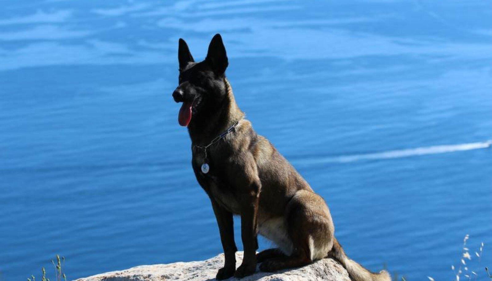 Fotol on Monika koer BTWW Olympias Monacos, kaelas PetID iBeacon