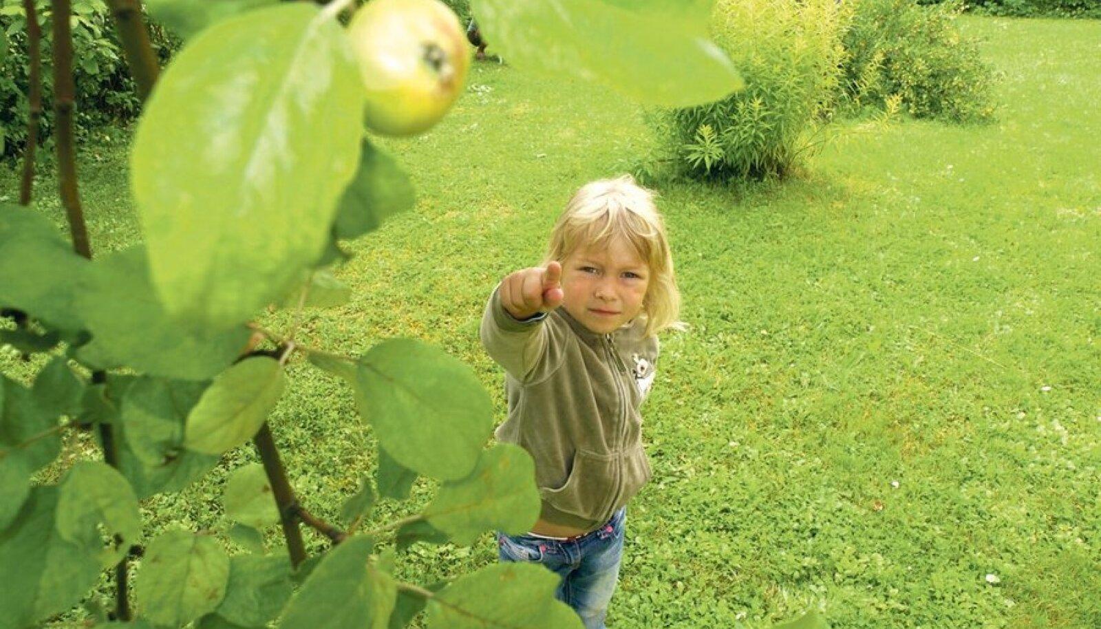Viiene Lisbeth Pesur võib üle lugeda kõik õunad, mida puul umbes ta enda       vanuse jagu ongi. Tema isa Andrus Pesuri sõnul nende Märjamaa kodu aias tänavu suuremat õunakorjamist ei tule.