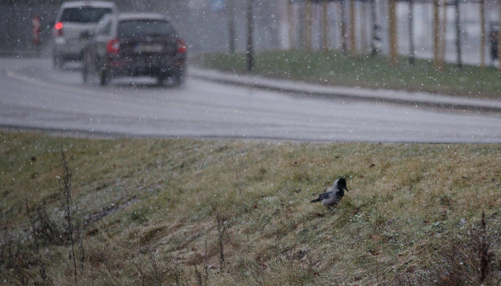 Tallinn, 26.12.2019. Tallinnas sadas hommikupoolikul suuri lumeräitsakaid.