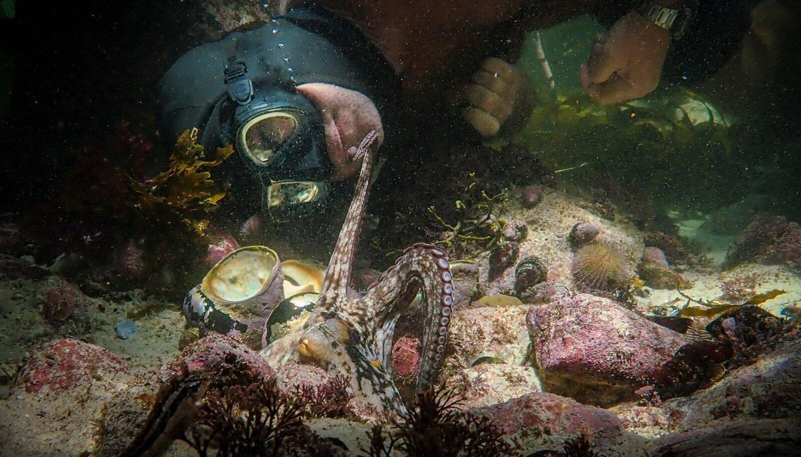KAKS VÕLUVAT PEATEGELAST: Masendunud filmitegija Craig Foster ja tema sõber, tavaline kaheksajalg.