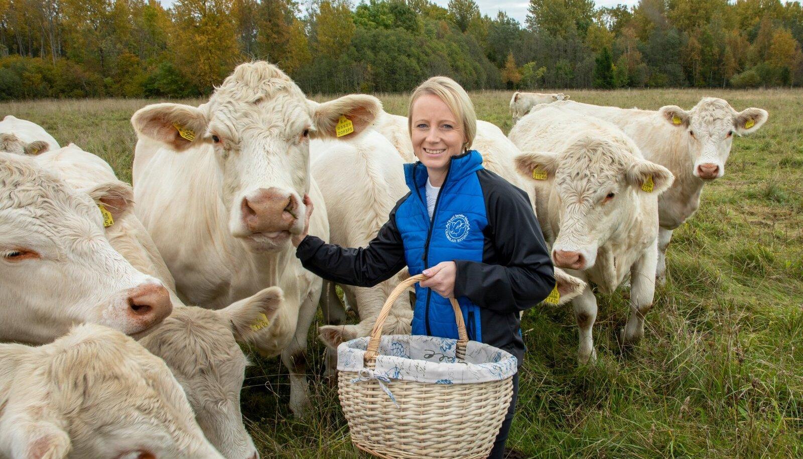 """""""Šarolee on väga eriline tõug ja meie loomakasvatajate huvi selle haruldase Prantsuse tõu vastu üha kasvab,"""" kinnitab Mariliis Vahar."""