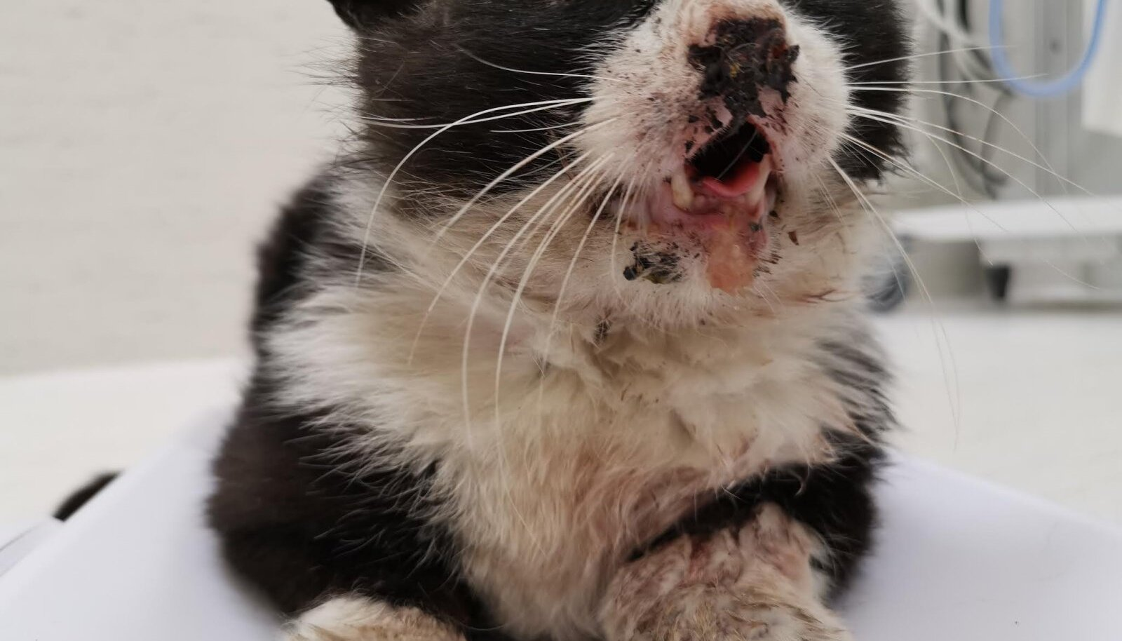 Kass  Mursiku peksmine tõi siiski kaasa kriminaaluurimis