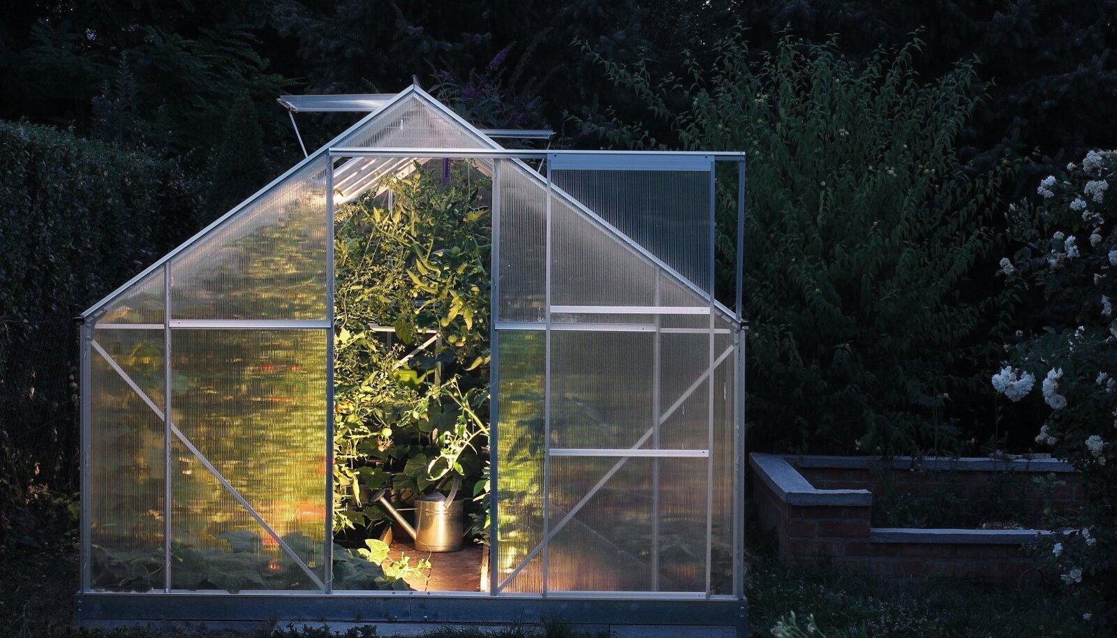 Jäta kasvuhoone öösiti avatuks.