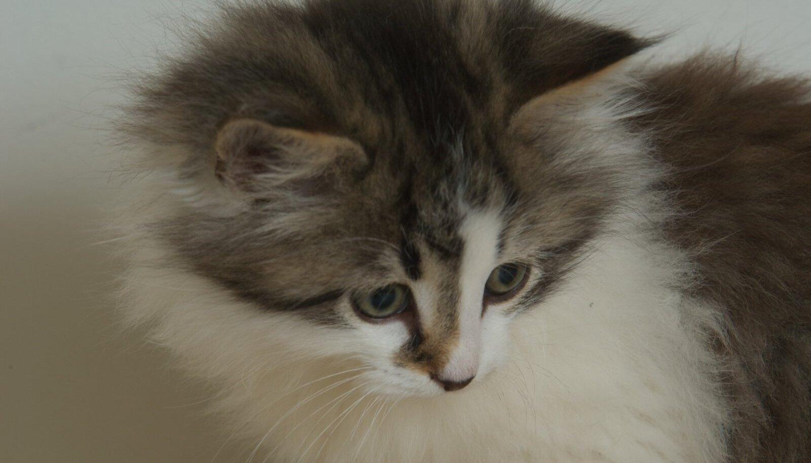Loomade varjupaiga kassipoeg