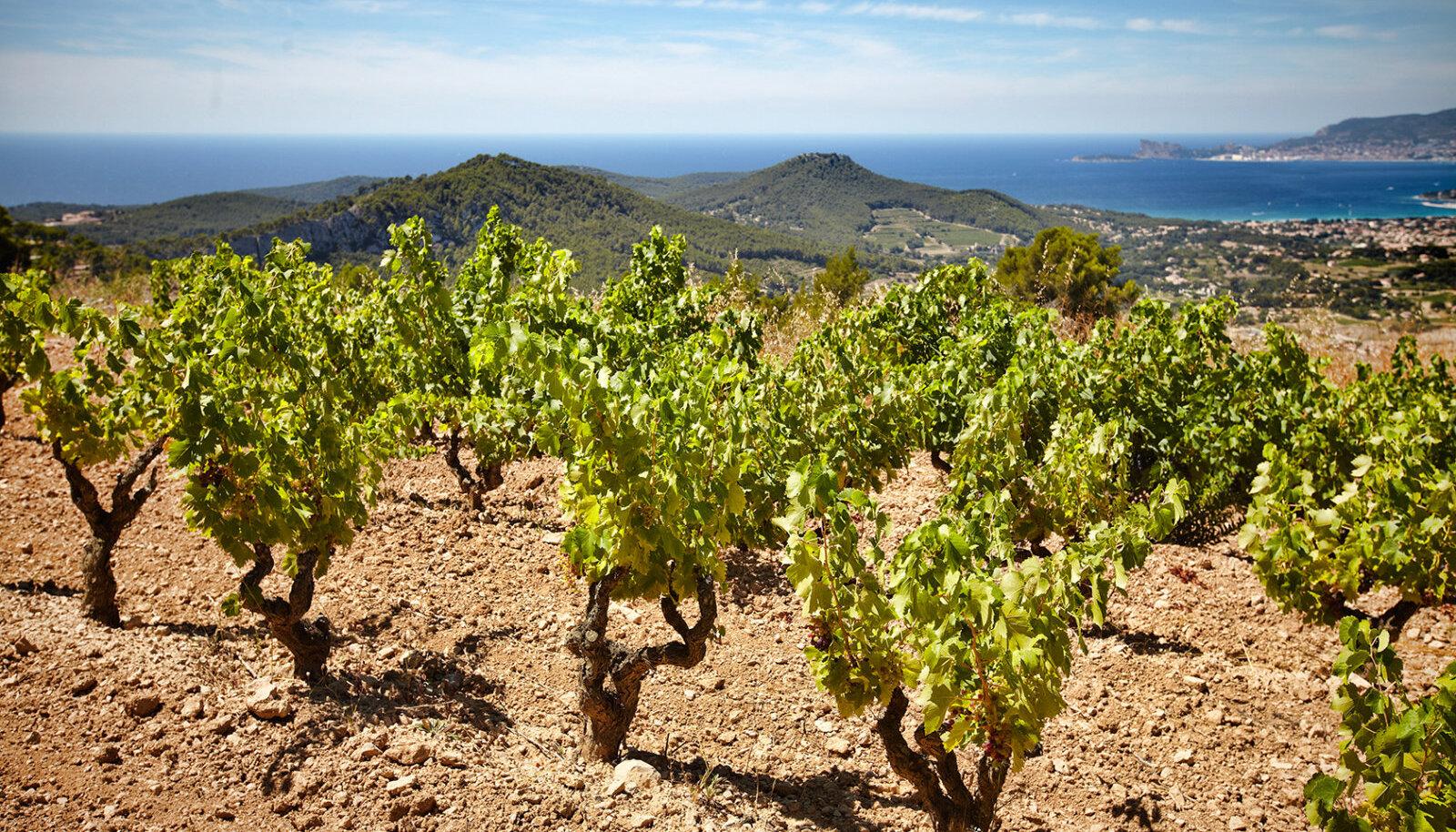 Côtes des Provance on piirkond Lõuna-Prantsusmaal, kus tänapäeval ka paljud staarid veini valmistavad. Veinid on alati kvaliteetsed, kahvatu roosaka värvusega ning kuivad. Foto: Serge Chapuis,