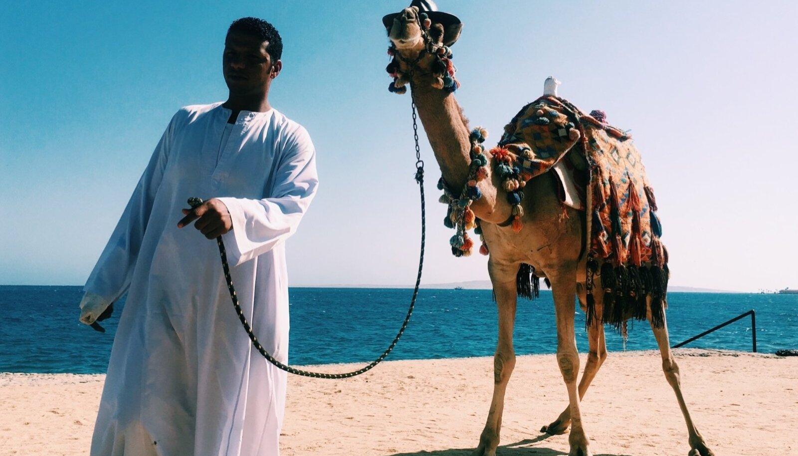 Egiptus ja kaamlid käivad käsikäes.