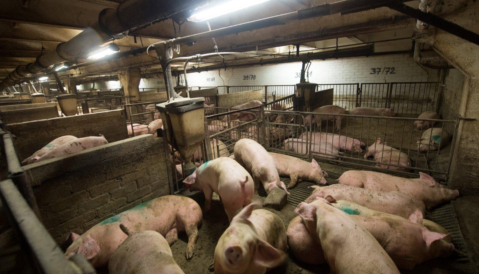 Sead farmis (foto on illustratiivne)
