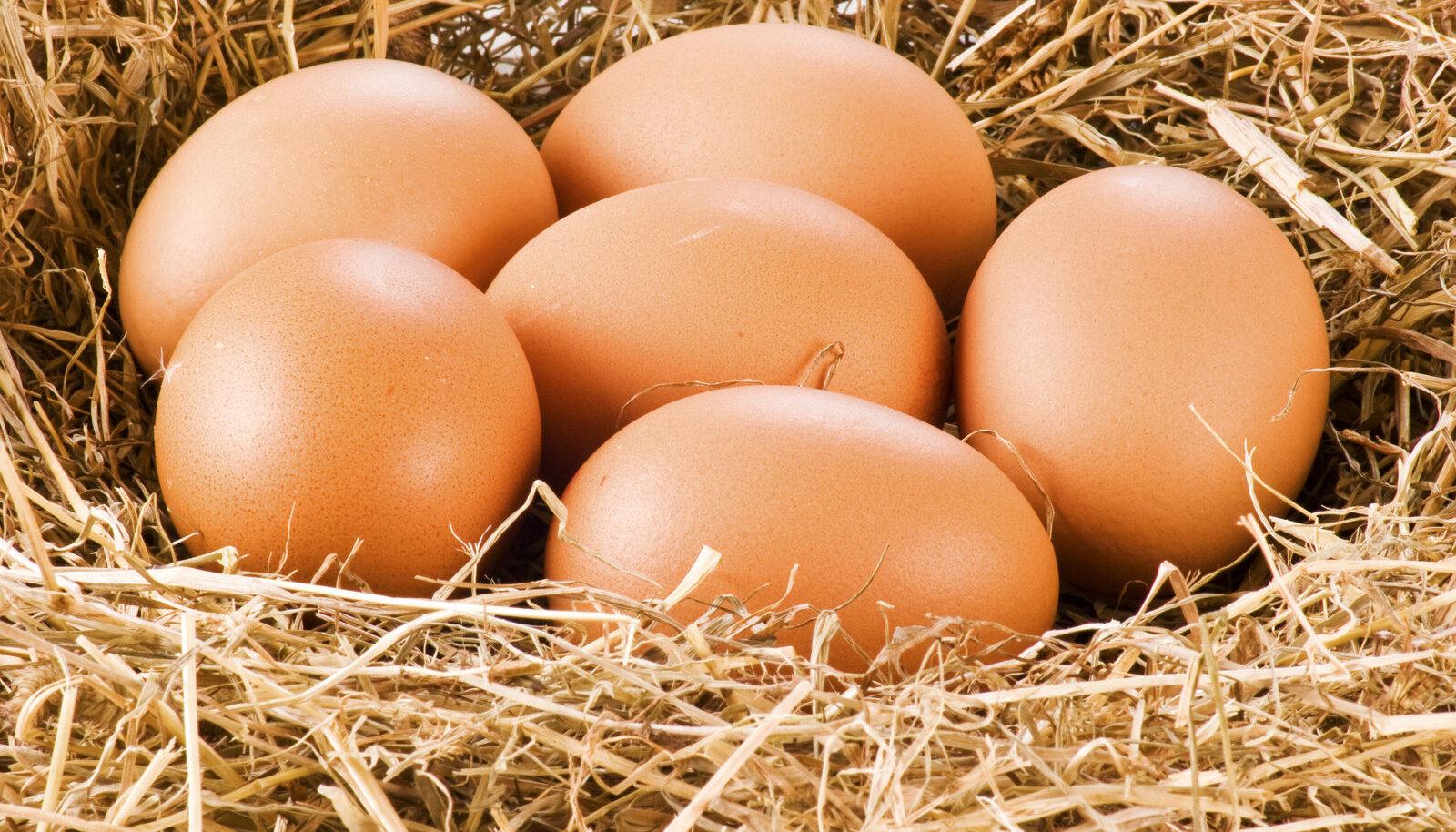 Vabakäigukanade munad sisaldavad rohkem E-vitamiini