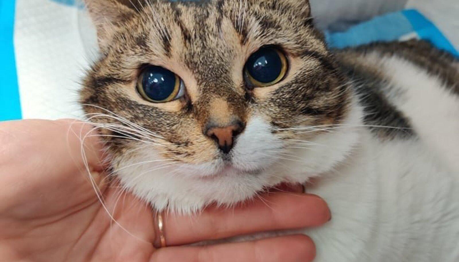 Aknast alla visatud kass