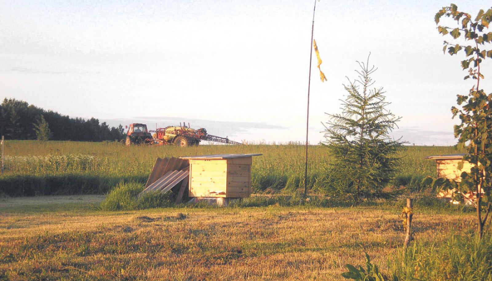 Taimekaitsetööd ohustavad  mesilasi.  Pilt on tehtud  Lauri Kallaste  mesila juures.