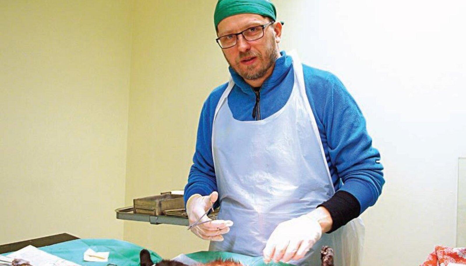Loomaarst Jaak Jõks kirurgi rollis. Foto: Agu Veetamm