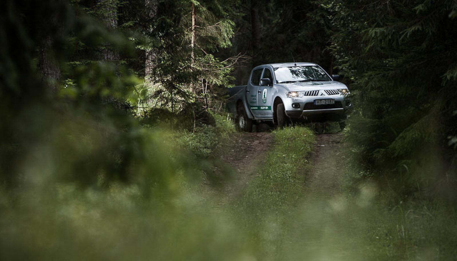 Lätis majandab Ikea metsa varem Baltijas Meži nime kandnud firma IRI Investments Latvia.