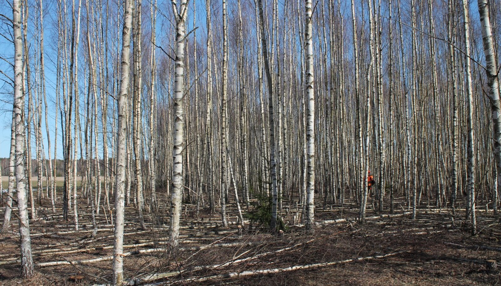 Metsameetmest toetatakse hooldustöid nooremas kui 30aastases metsas.