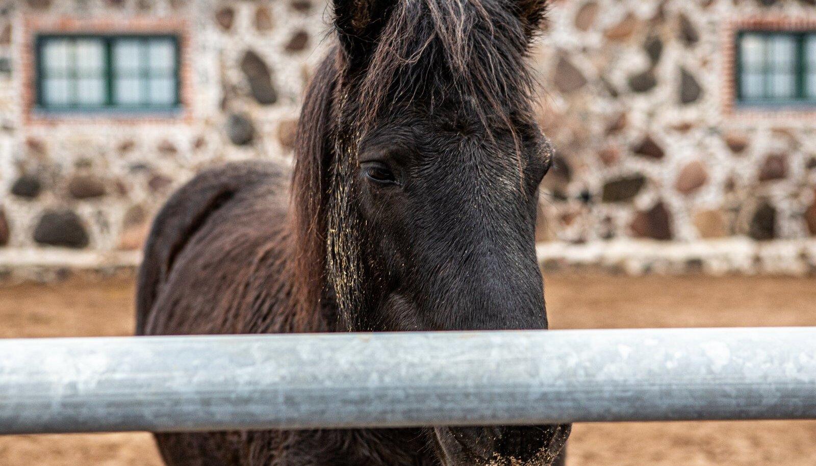 TALLI ASUKAS: Hobune Tori tallis.