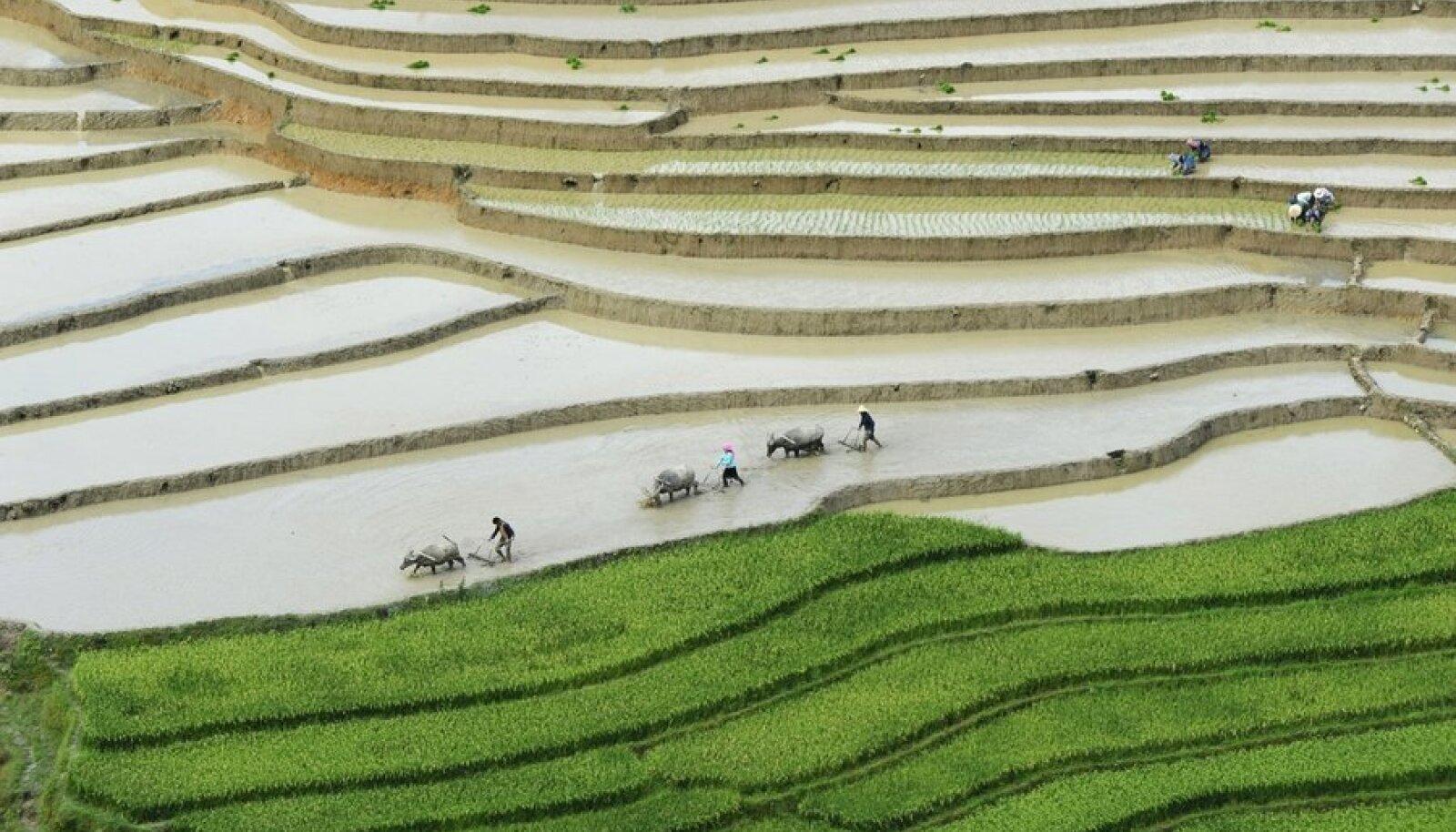 riisipõld vietnamis