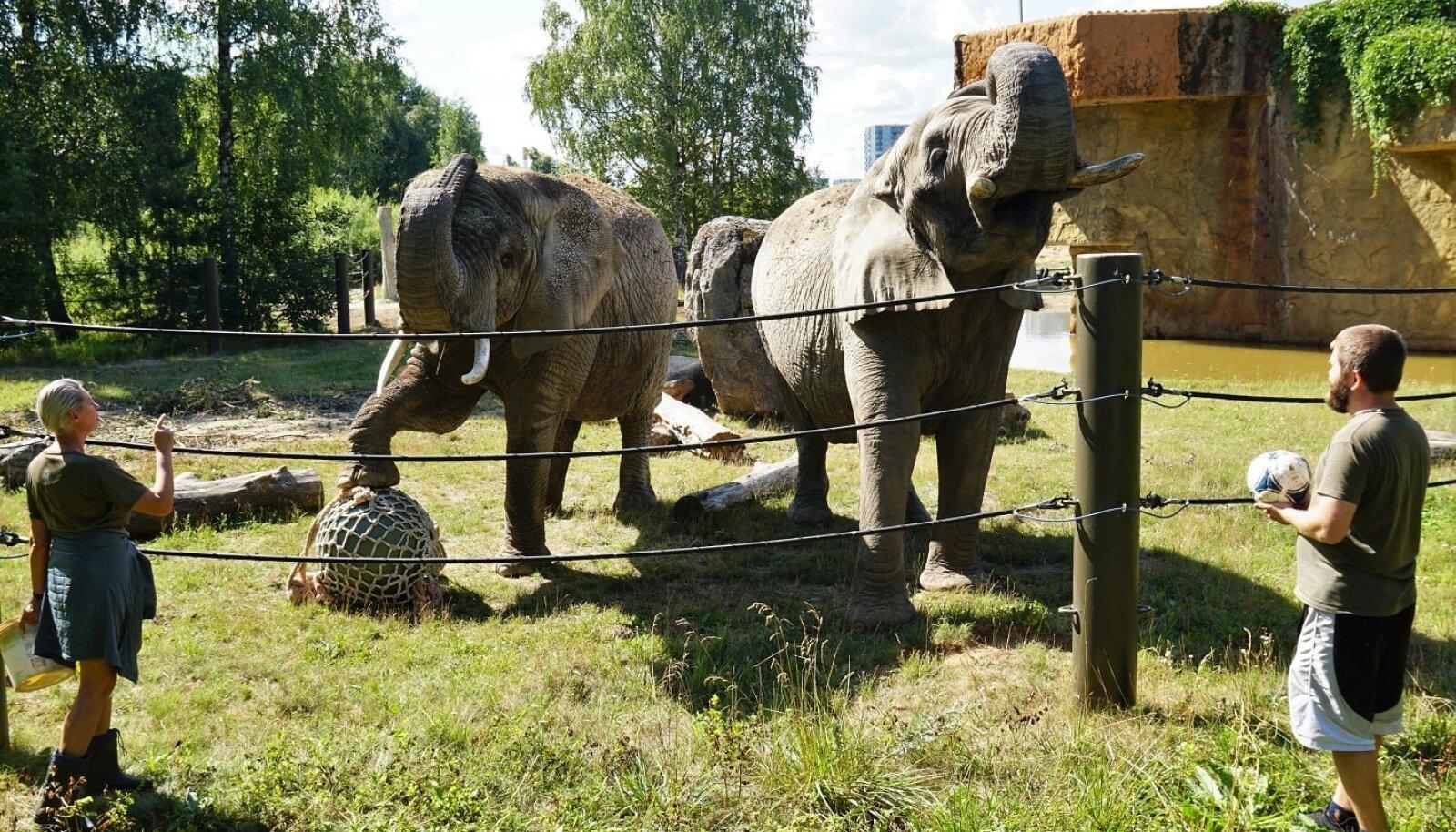 12. augustil toimub rahvusvaheline elevandipäev