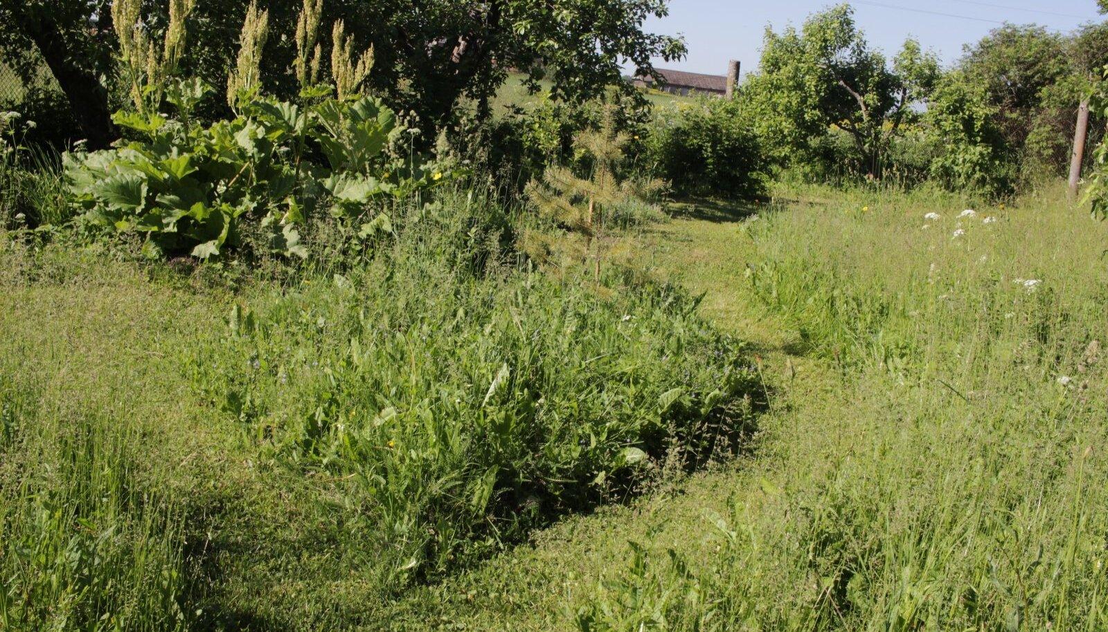 Aias on liikumiseks niidetud rajad, muu las kasvab ja õilmitseb.