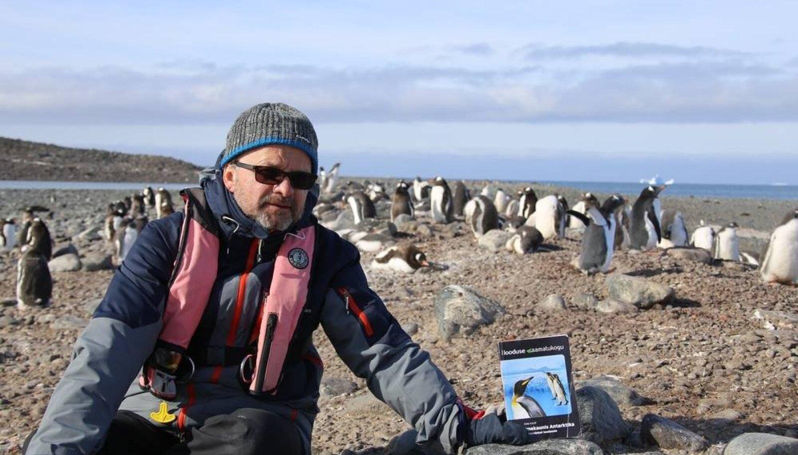 Tiit ja pingviinid