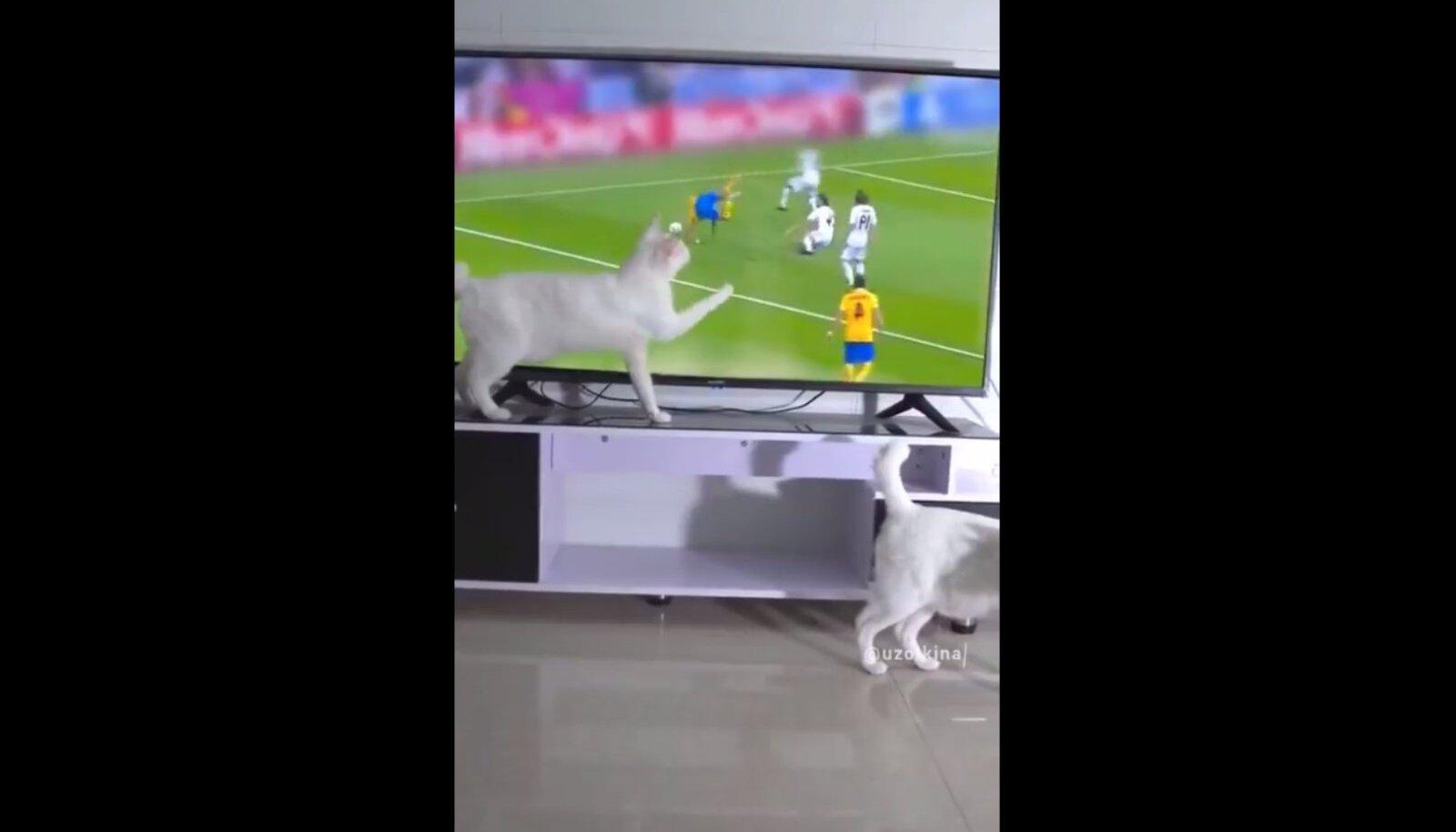 Kass videomängu mängimas