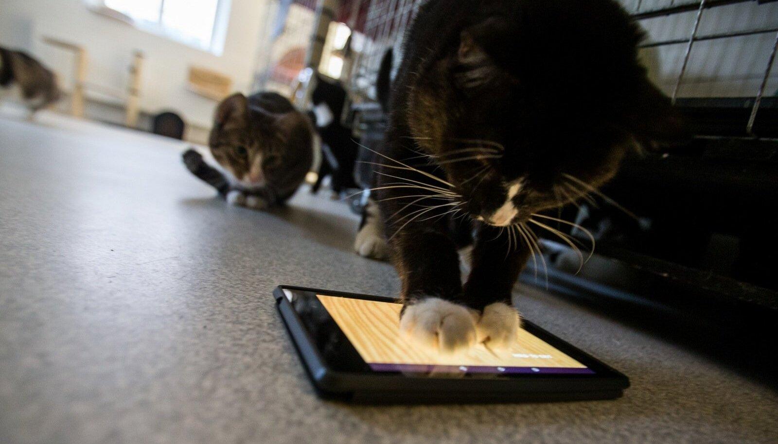 Kui Kansas Citys loodi 2014. aastal kiire Google'i kaabelühendus, siis juhtus see, et hakati saatma 600 kassipilti nanosekundis.