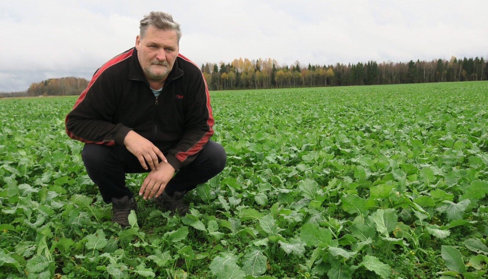 Kui sel hooajal võistles mahe seemnevilja tootja Tiit Tamme talirüpsiga, siis uueks saagiaastaks on külvatud juba uus katse – mahe taliraps.