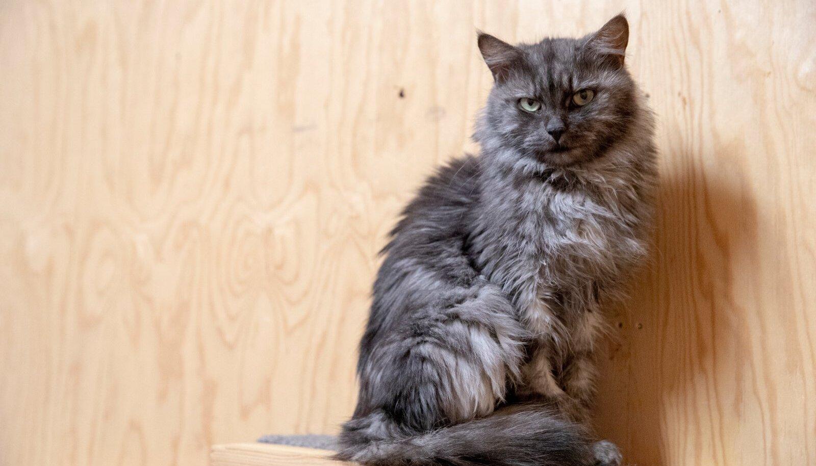 Varjupaikade MTÜ Tallinna varjupaik, musta kassi kuu